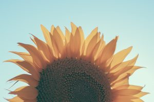 A sunflower represents how your self perception can blossom with counseling for low self-esteem in Texas with online therapist Addie of Everyday Bravery.